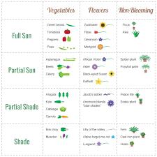 Vegetable Sunlight Requirement Chart Sun Chart For Various Vegetables Farm Gardens Geraniums