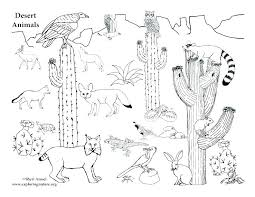 desert coloring pages printable animal animals plants pa org free