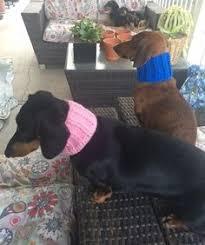 new sausage dog dachshund beautiful pact mirror handbag novelty wedding gift memories gifts