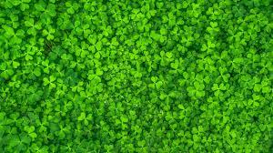Green Leaf Plants HD Green Wallpapers ...