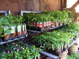 making an indoor vegetable garden design with shelving