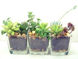 low maintenance office plants. Low Maintenance Office Plants 9 For The Green Design Intended