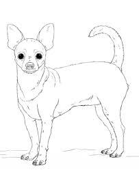 Chihuahua Kleurplaat Gratis Kleurplaten Printen