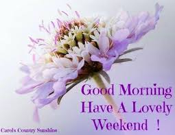 Weekend Good Morning Quotes Best of Good Morning Have A Lovely Weekend Quote Pictures Photos And