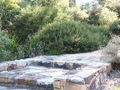 Small Picture Bulli Garden Design by Mallee Design Australian Native Gardens