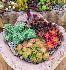 how to grow succulent plants outdoors