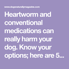 natural heartworm treatment. 5 Natural Heartworm Treatment Alternatives