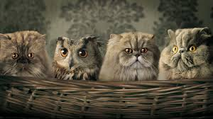 manited pets wallpapers and stock photos