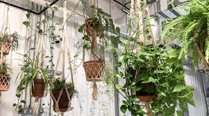 best hanging plant stands for your