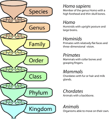 Kingdoms Of Biology Chart Classification Ck 12 Foundation