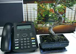 bonsai tree for office. Inch Artificial Bonsai Tree For Office -