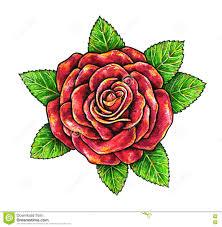 красная роза цветок на белой предпосылке иллюстрация штока