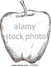 apple fruit drawing realistic. apple fruit draw - stock photo drawing realistic