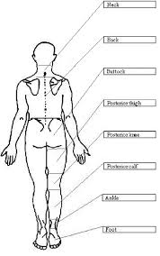 Hand Body Chart Body Chart Used To Identify Location Of Response Download