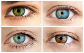 Eye Color Probability Chart Genetics And Eye Color What Determines Eye Color