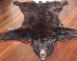 authentic vintage black bear skin rug