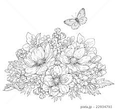 Anemone Flowers And Butterfly Sketchのイラスト素材 22934793 Pixta