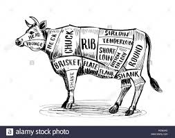 Cattle Chart Butchers Cow Chart Ink Black And White Illustration Stock