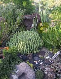 Small Picture outdoor succulent garden design How to design succulent garden