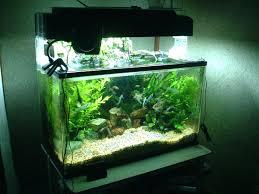 fish tank decor ideas freshwater aquarium decorations .