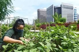 rooftop farms central to singapore s