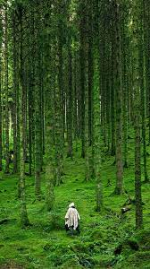 na48-in-wood-forest-green-mountain-nature