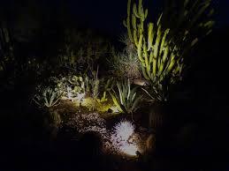 Desert Botanical Garden Light Display Walking Arizona Night View Of The Desert