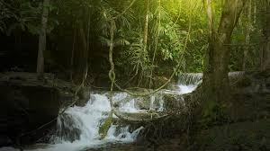 jungle background. Delighful Jungle Jungle Rainforest Background With Green Plants Vegetation And River  Cascades Stock Video Footage  Videoblocks Intended Background K