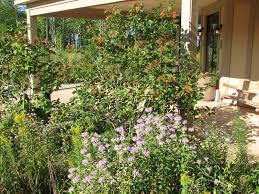 st ignace native plant garden with wild bergamot goldenrod and highbush cranberry