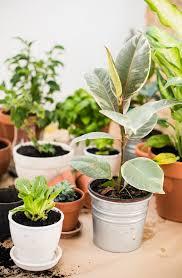 L 7 Indoor Gardening Tips For Thriving Houseplants  Natureu0027s Path