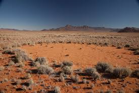 mysterious fairy circles in namibian desert explained at last