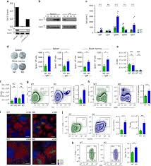 downregulation of gal 3 during pc diffeiation and increased concentration of igs and spontaneous gc formation in gal 3 ko mice a splenic b cells were