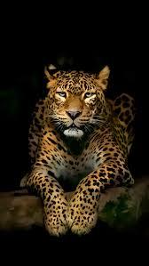 pic id 100370041 800x1422 px iphone cheetah wallpaper