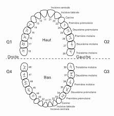 Primary Teeth Chart Letters Child Tooth Numbering System