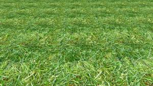 grass texture game. Brilliant Game Normalmapgrass In Grass Texture Game R