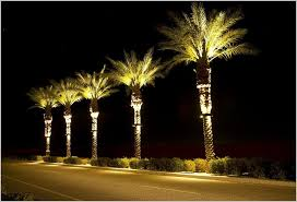 industrial outdoor lighted palm tree