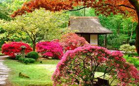 1 anese garden plants gazebo pink blossom shrub