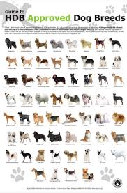 Pin By Justine Helleson On Dogs For Me Dog Breeds Chart