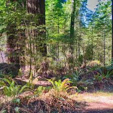 The staff is sweet and informative, they are doing a fantastic job running the place. Grizzly Creek Redwoods Campground Grizzly Creek Redwoods Ca 5 Hipcamper Reviews And 14 Photos