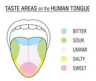 Taste Buds Colored Tongue Chart Stock Vector Illustration