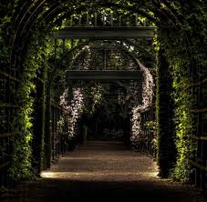 the forgotten garden review