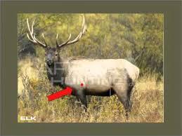Elk Shot Placement