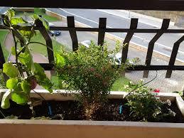 Verde bongo colui che semina un giardino semina la felicità