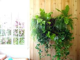 indoor plant wall hangers hanging plants a all new woolly living planter the mount small po