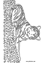 Dessins Colorier Coloriage Tigre Imprimer Prefix Et Lion X Dessin S Dessin Coloriage Lion Et TigreL