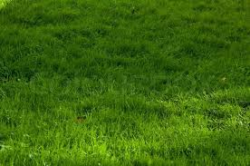 green grass texture from a soccer field top view stock photo colourbox green o24 green