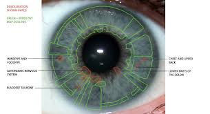 Eye Iridology Surprising Findings Iris The Picture Of Health