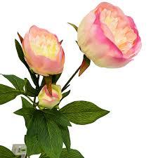 Цветы ветки - Агрономоff