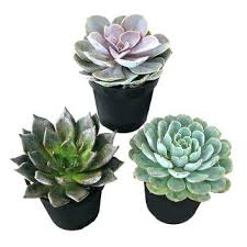 home depot flowers cactus plants at home depot succulents cactus plants garden plants flowers the home