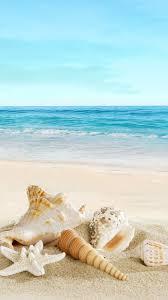 iphone 6 wallpaper beach. Interesting Beach Nature Sunny Sea Shell Beach IPhone 6 Wallpaper With Iphone Wallpaper E